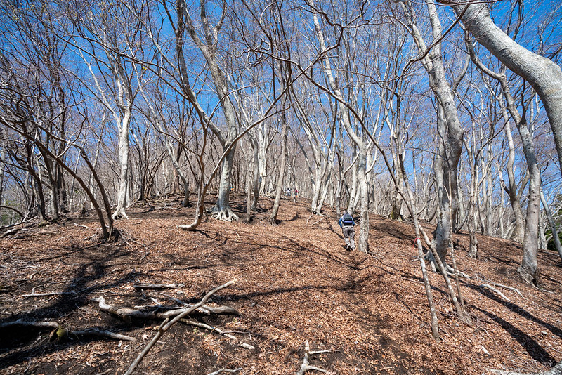ブナの樹林帯に変わった