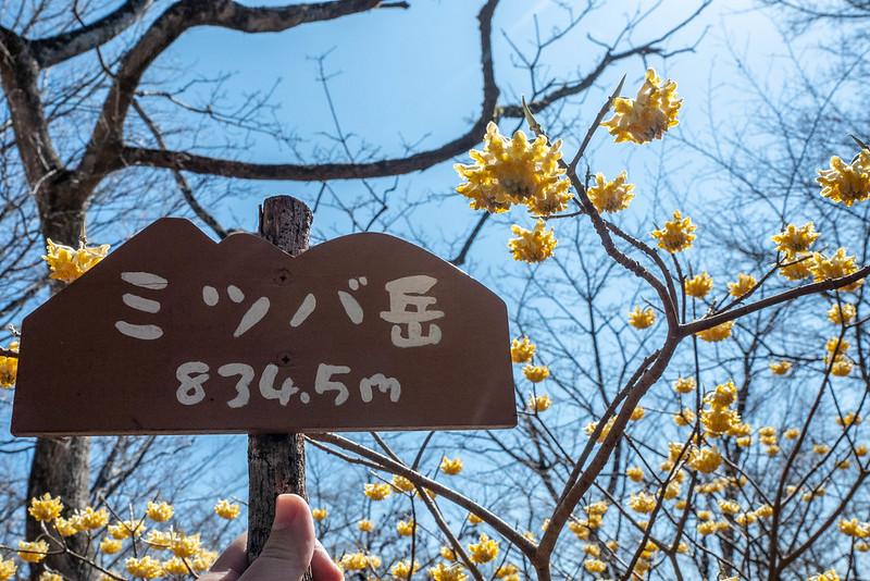 ミツバ岳834.5m