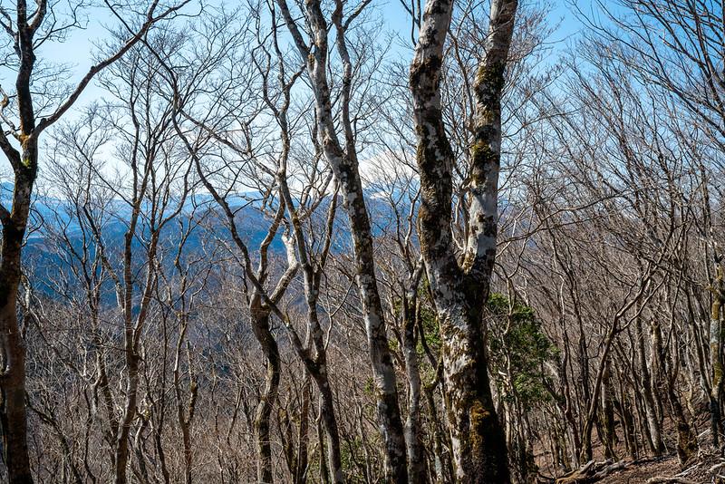 丹沢の権現さんから見える富士山