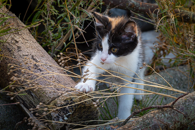 Hiding between grass and undergrowth