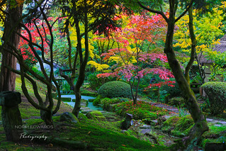 Japanese Garden | by norm.edwards