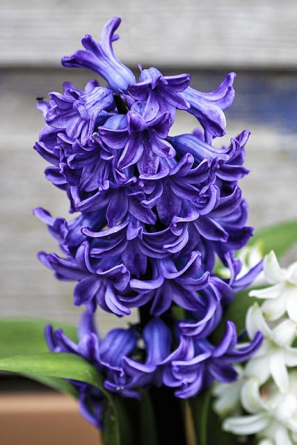 My Garden Flowers 2
