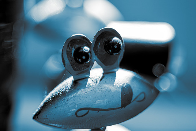 Frosch / Frog