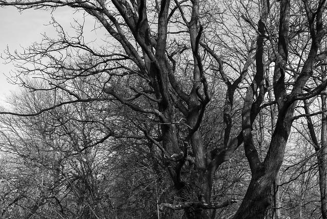 awesome tree @ walking path