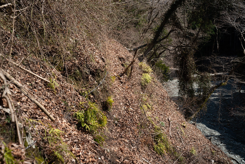 権現山の登山道