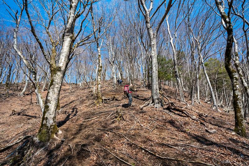 権現山への登りも急斜面