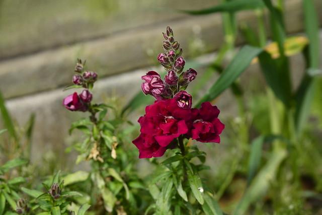 Garden (344)