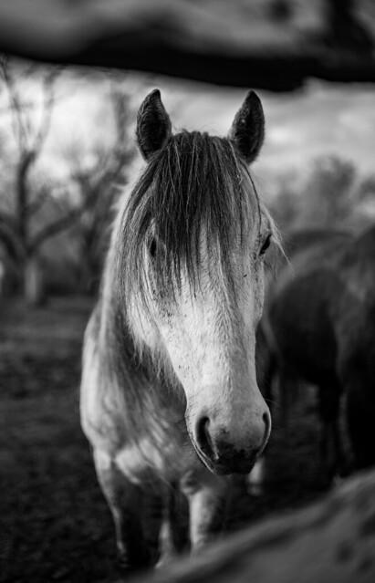 Horse through a fence