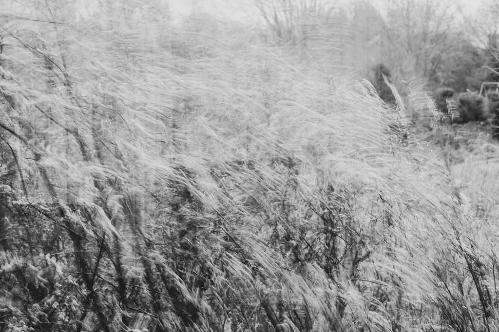 windy movement