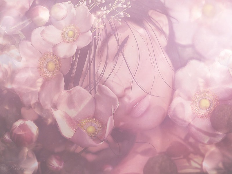 Pryce: Bloom of Spring Campaign - Anémone