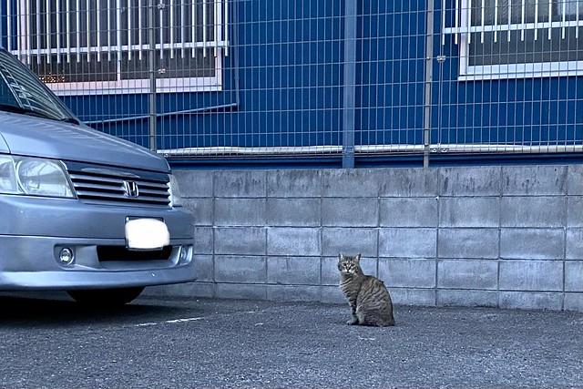 Today's Cat@2021−03−20