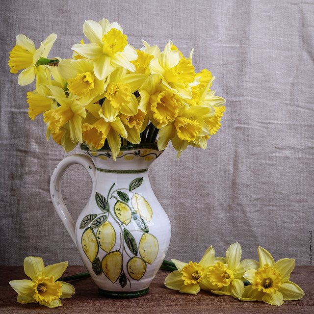 Daffodils for Mother