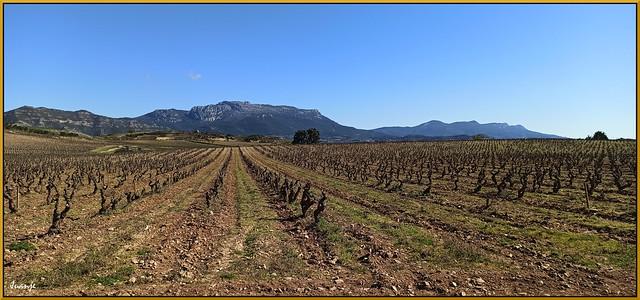 Viñedo en Haro (La Rioja, España, 13-3-2021)