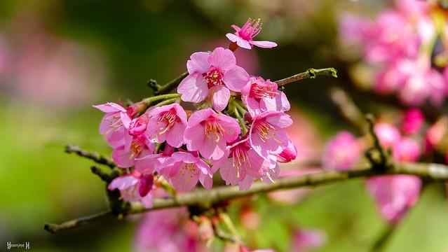 9533 - Spring