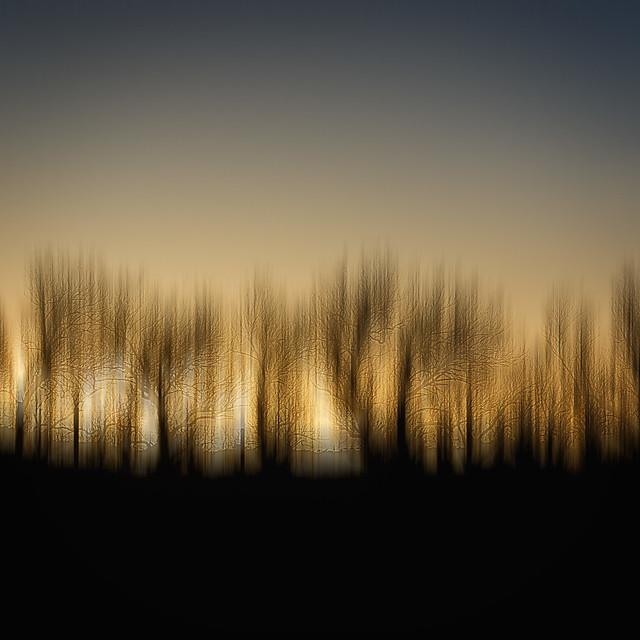Harlyn Trees