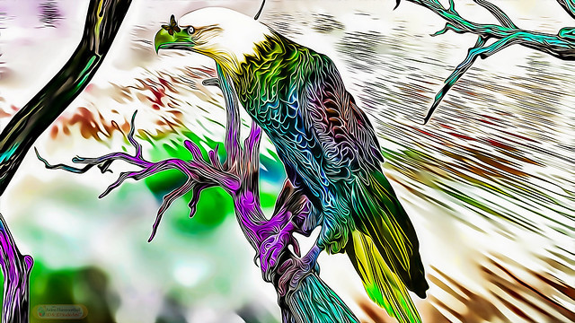 Multicolor Eagle Art - 2021 - (HQ)