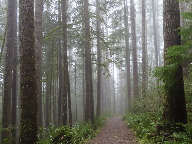 Hiking through the rain and fog at Wallace Falls State Park (In Explore)