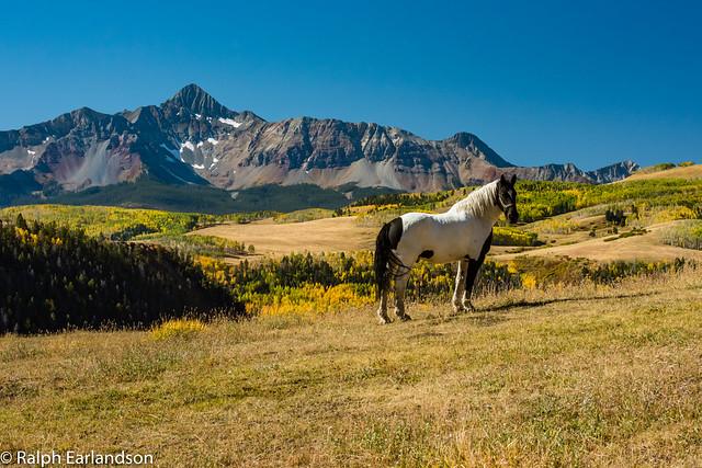 Horse and Colorado's San Juans