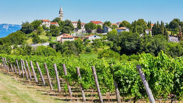 Gračišće i vinogradi