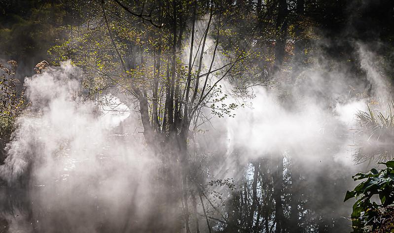 Fan7  - François Leroy | Etang dans la brume