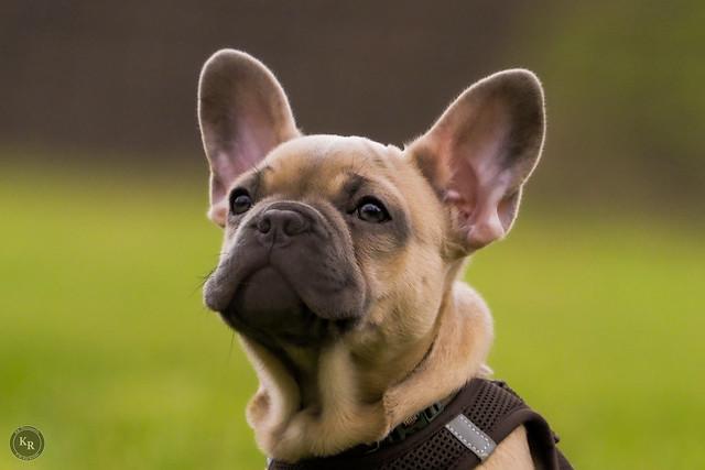 Welpen Training / Puppy Training,