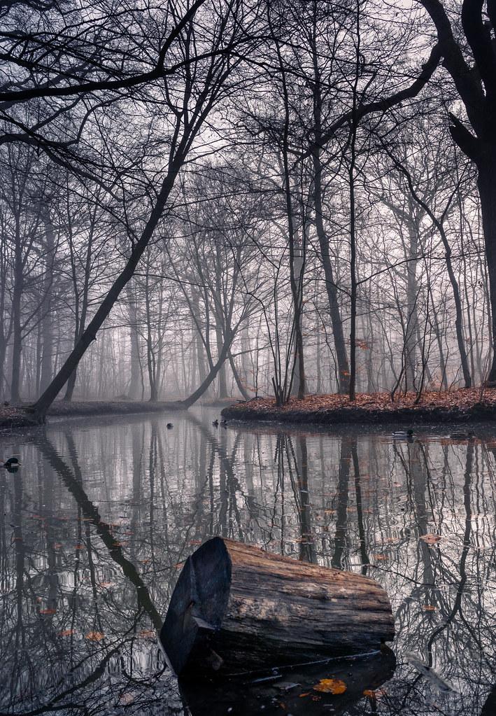 Reflected foggy woodlands