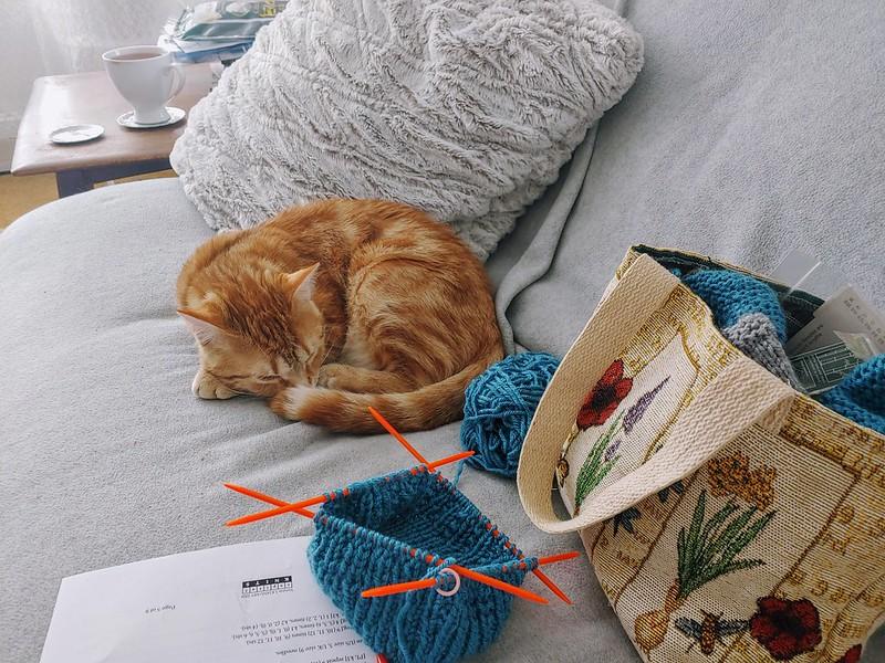 The kitten helps knit