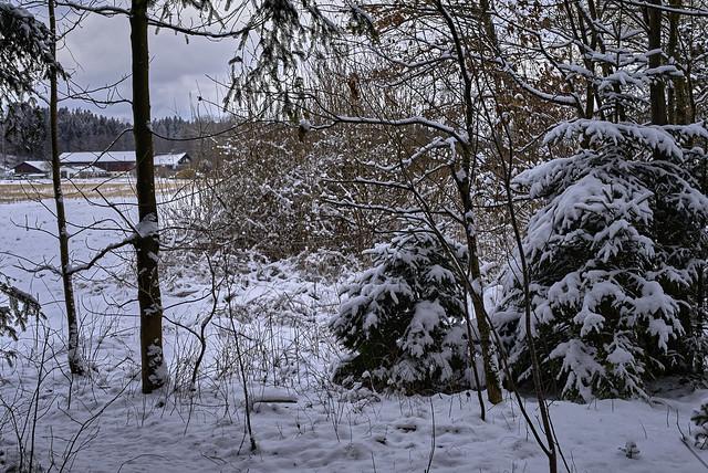 Winterwald kurz vor Frühlingsanfang
