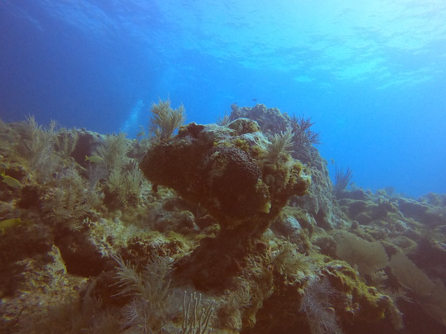 23 March 2021 AM boat diving