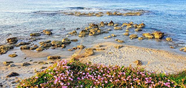 Wild flowers and rocks
