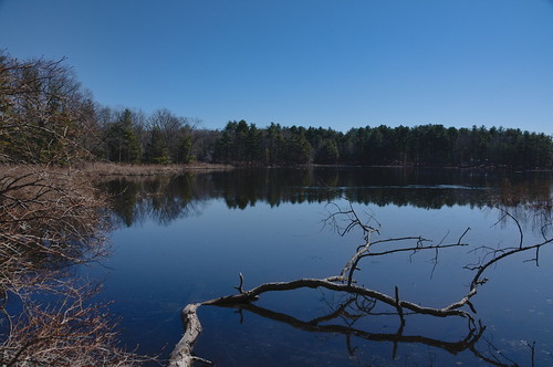 bakermeadow pond lake andover massachusetts cloudy water reflection tree grass winter landscape frozen cold park