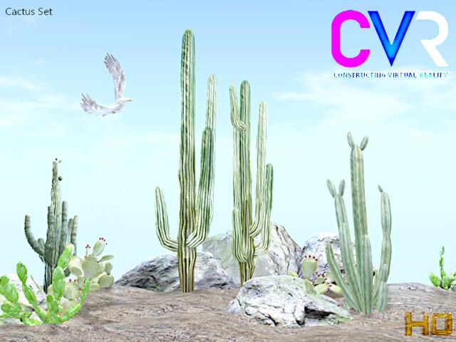 cactus_6_003