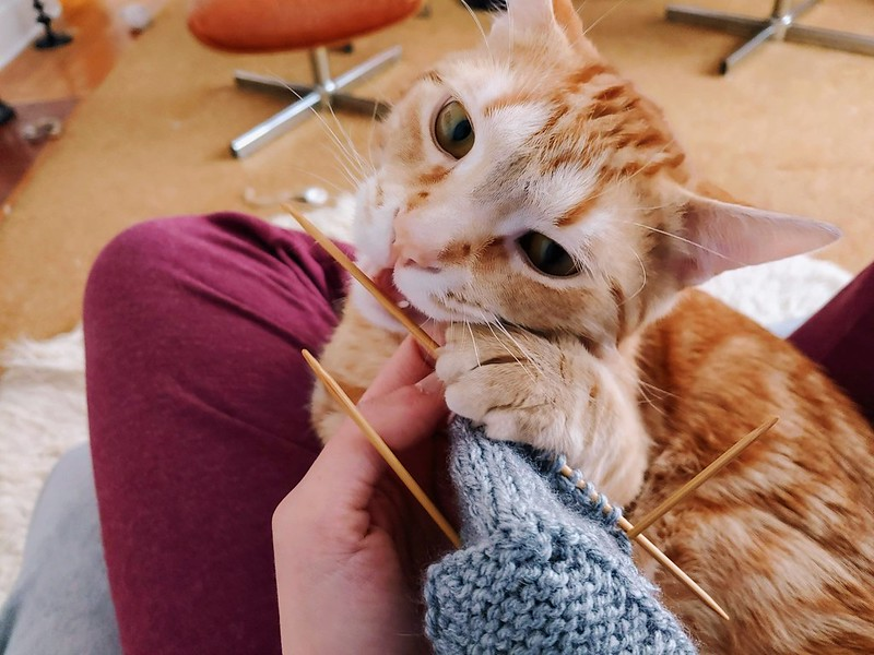The kitten helps knit