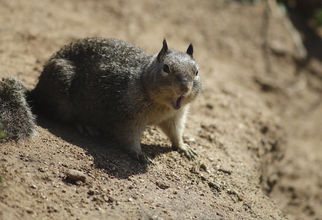 Startled Squirrel