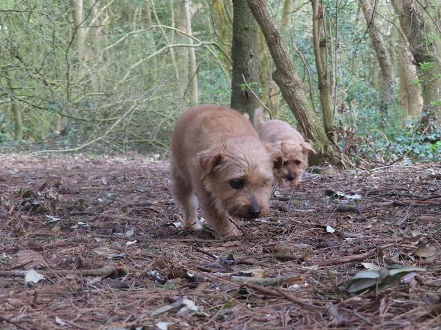 Dottie and Tipple Chatsworth Park 21.03..2021 002