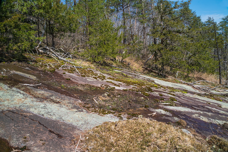 Wet, seepage on the gneiss bald toward the top of the mountain.