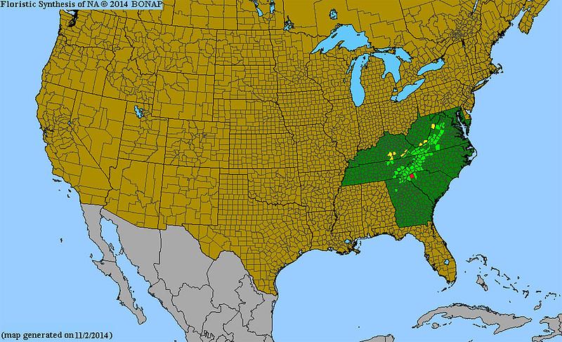 BONAP map of Micranthes petiolaris