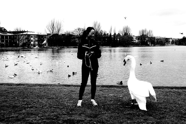 Chinese girl and swan