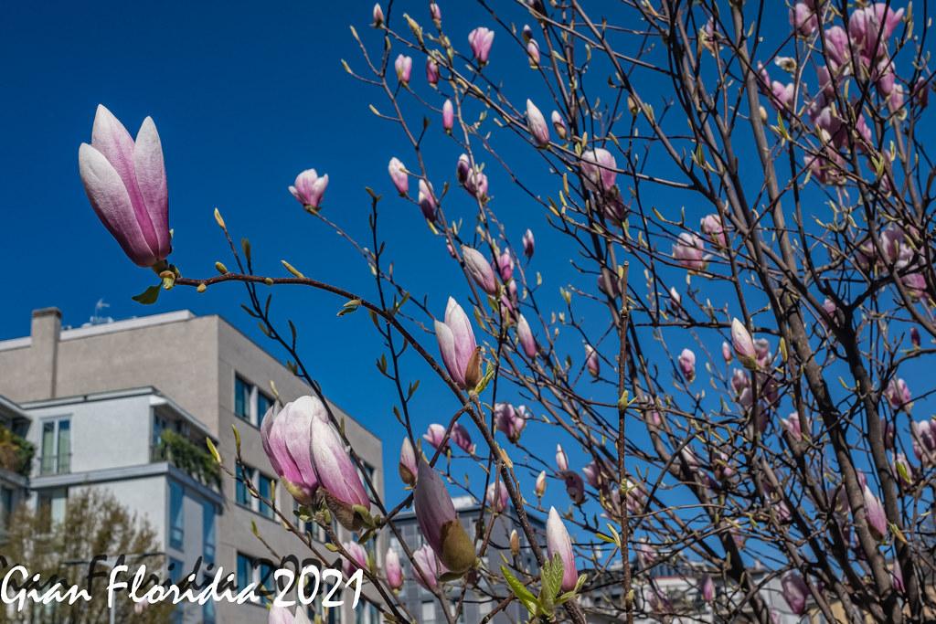 Benvenuta primavera!