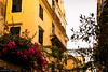 Flowers in Corfu Town
