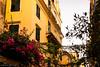 Flowers in Corfu Town