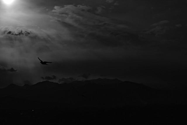 DSC_3137-  Voli al tramonto - Sunset flights.