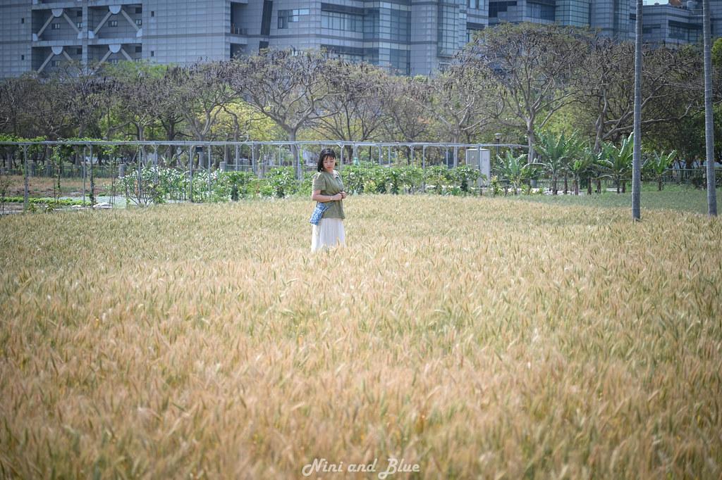 中科九重葛 大雅麥田 人物拍攝02