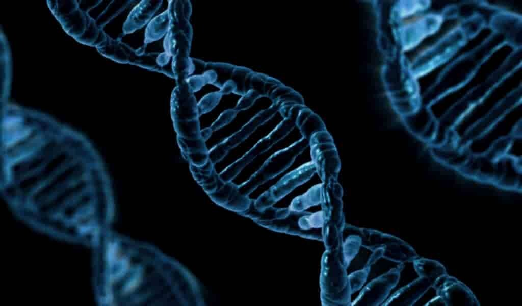 découverte-de-activation-et-désactivation-précise-des-gènes