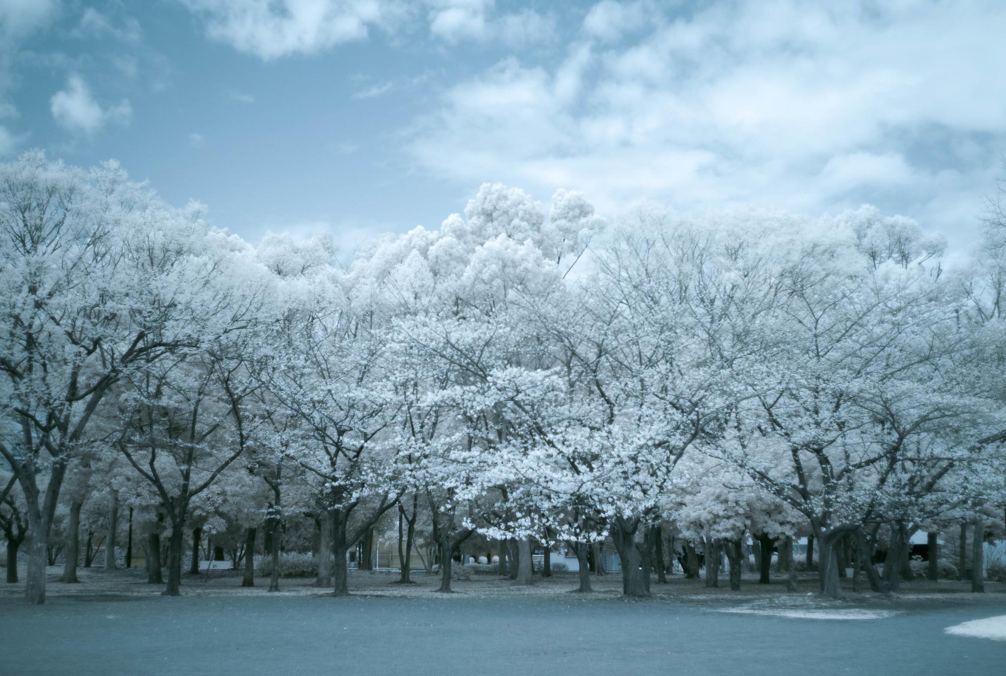 Kiyosumi Park(infrared photography)