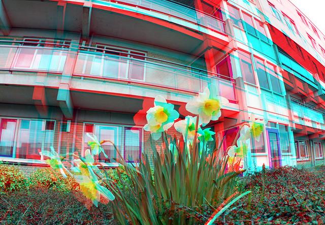 Narcissus Kobelaan daktuin Rotterdam 3D Fish-eye