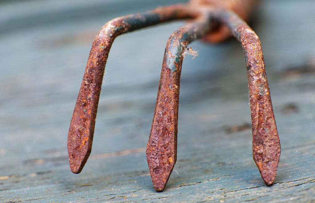 A rusted hand rake.  IMG_5489