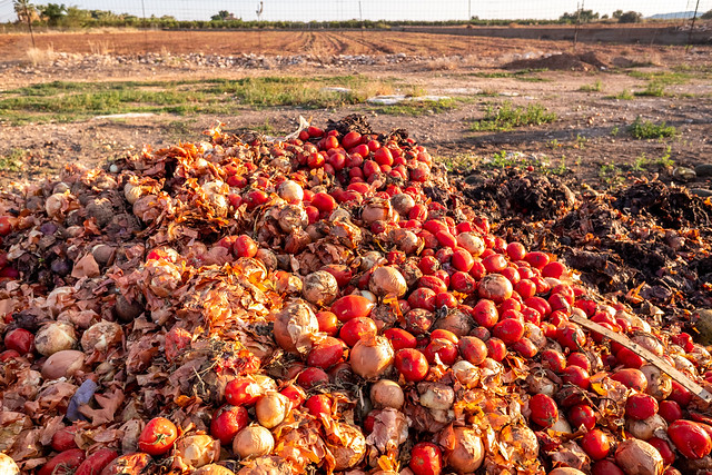 Vegetables thrown into a landfill, rotting outdoors