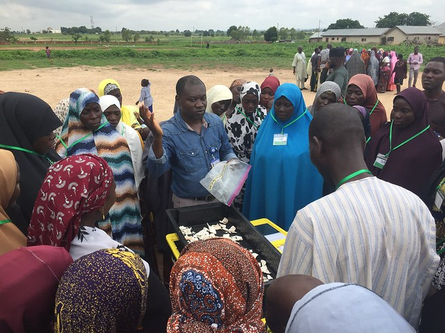 A DehyTray demonstration at a postharvest loss reduction training in Minna, Nigeria