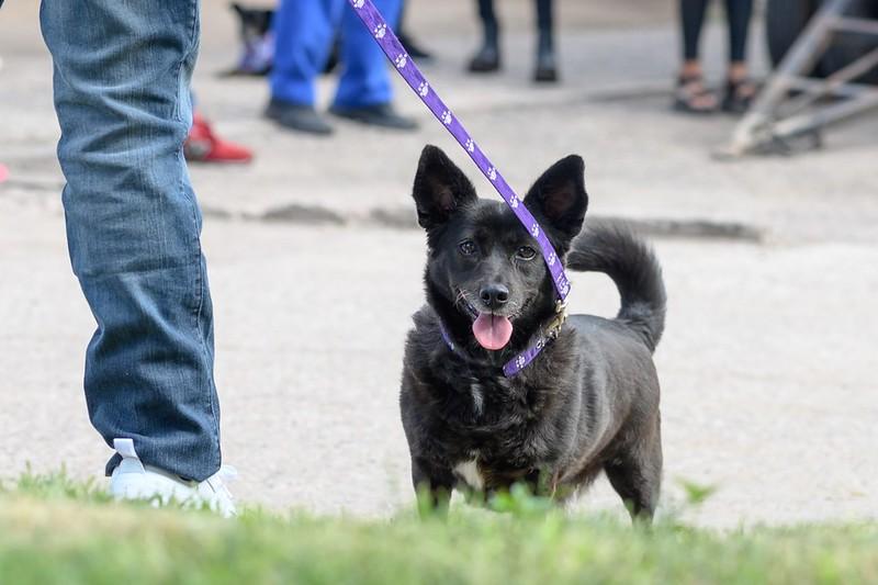 Incorporan dos móviles de castraciones gratuitas para mascotas y animales en situación de calle (2)